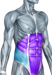 Oblique muscles for tango